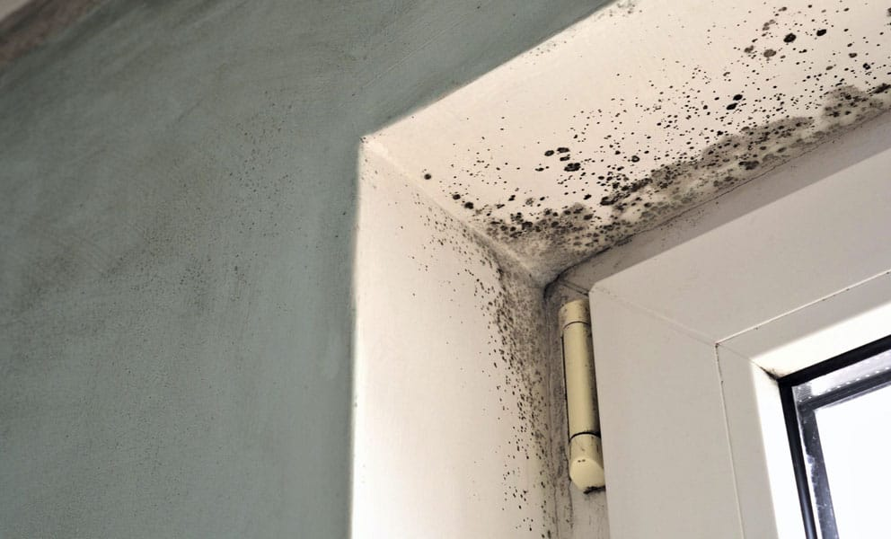 How Do You Get Rid of Mould on Bathroom Walls?